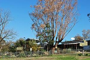 Bethanga, Victoria - Bethanga Primary School