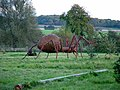 Big spider at Pakenham - geograph.org.uk - 1032948.jpg