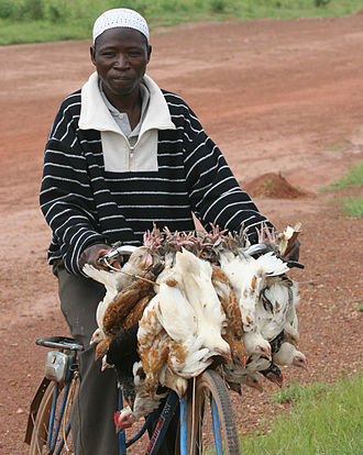 Poverty reduction - Man on bike with chickens, Ouagadougou, Burkina Faso