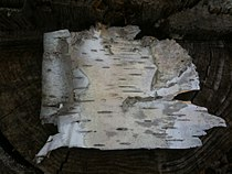 Birchbark Sample.jpeg