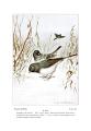 Bird-Life-0103-145.png