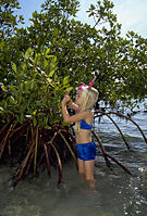 Biscayne National Park V-kid and red mangrove.jpg