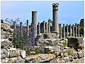 Blühende Ruinen flowering ruins (47661656041).jpg