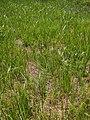 Blady grass.jpg