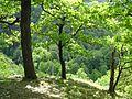 Blick ins Bodetal - panoramio.jpg