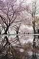 Bloomin (Unsplash).jpg