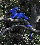 Blue Dragon (31133399241).jpg