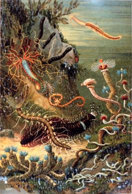 Дождевой червь это насекомое или животное
