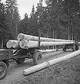 Bosbewerking, boswegen, auto's, boomstammen, vervoeren, Bestanddeelnr 251-8819.jpg