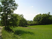 Bosco località Coste di Montefiascone