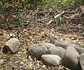 Bosque seco. Carara. Costa Rica.JPG