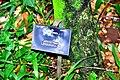Botanic garden limbe26.jpg