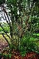 Botanic garden limbe9.jpg