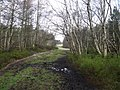 Bottom Moor - Woodland Path - geograph.org.uk - 340268.jpg