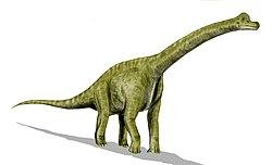 Brachiosaurus BW.jpg