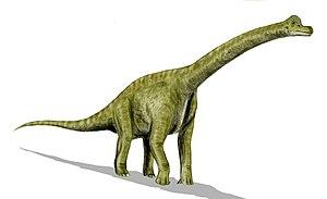 Un brachiosaure dessiné par un artiste.