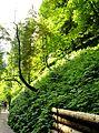 Breitachklamm, Bäume mit Sichelwuchs.JPG