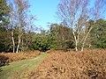 Bridleway near Hankley Farm - geograph.org.uk - 272491.jpg