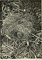 British land mammals and their habits (1911) (20230279978).jpg