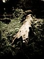 Broken bark of a tree.JPG