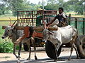 Bullock Cart and Driver - Near Mysore - India.JPG