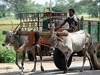 Bullock Cart and Driver - Near Mysore - India.JPG
