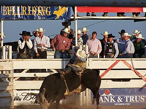 Bull riding - Wikipedia, the free encyclopedia