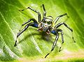 Buntalshoot - Spider (by).jpg