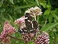 Butterfly23.JPG