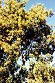Côté du jardin au Tampon (3227418667).jpg