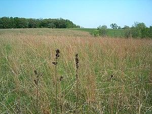 Conard Environmental Research Area - Restored prairie at CERA.