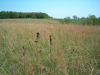 Conard Environmental Research Area - Restored prairie at CERA.