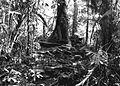 COLLECTIE TROPENMUSEUM Ruïne in het bos bij de rubber- en theeplantage Goenoeng Manik omgeving Lampegan TMnr 60016455.jpg
