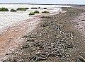 CSIRO ScienceImage 1708 Island within Lake Frome.jpg