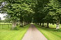 Cadhay House Tree Lined Drive - geograph.org.uk - 943919.jpg