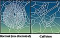 CaffeinatedSpider2.jpg