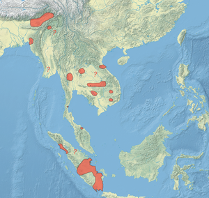 White-winged duck - Image: Cairina scutulata distribution map