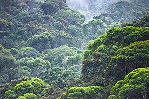 Caparaó National Park - Image: Caparaó e a Mata Atlântica
