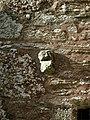 Carved stone head on side chapel to St Brynach's Church, Nevern (Nanhyfer), near Newport - Trefdraeth - geograph.org.uk - 886886.jpg