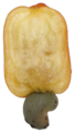 Cashew Brazil fruit cut.png