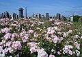 Castle Douglas Cemetery - geograph.org.uk - 697740.jpg