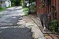 Cat walking in a passageway perpendicular to Rue Holt 02.jpg