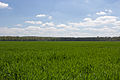 Chailly-en-Bière - 2013-05-04 - IMG 9740.jpg