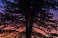 Charlottetown Sunset Tree, Prince Edward Island (23742532060).jpg