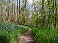 Chemin forestier - Forêt de Mervent-Vouvant.jpg