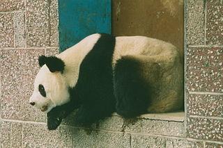 Chengdu Zoo Zoo in Chengdu, China