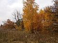 Cherkas'kyi district, Cherkas'ka oblast, Ukraine - panoramio (347).jpg