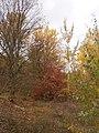 Cherkas'kyi district, Cherkas'ka oblast, Ukraine - panoramio (392).jpg
