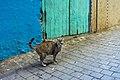 Citizen of Tangier-3.jpg