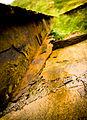 Close up of derelict rail, Brean Down, Somerset (2999177367).jpg